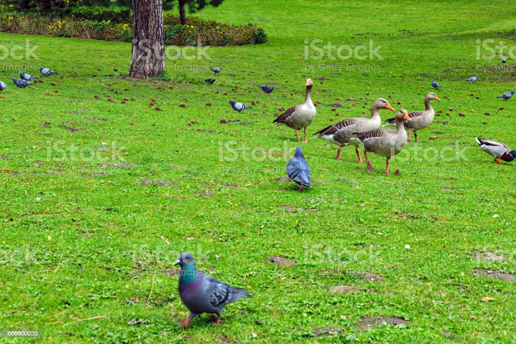 Birds in the Parks stock photo