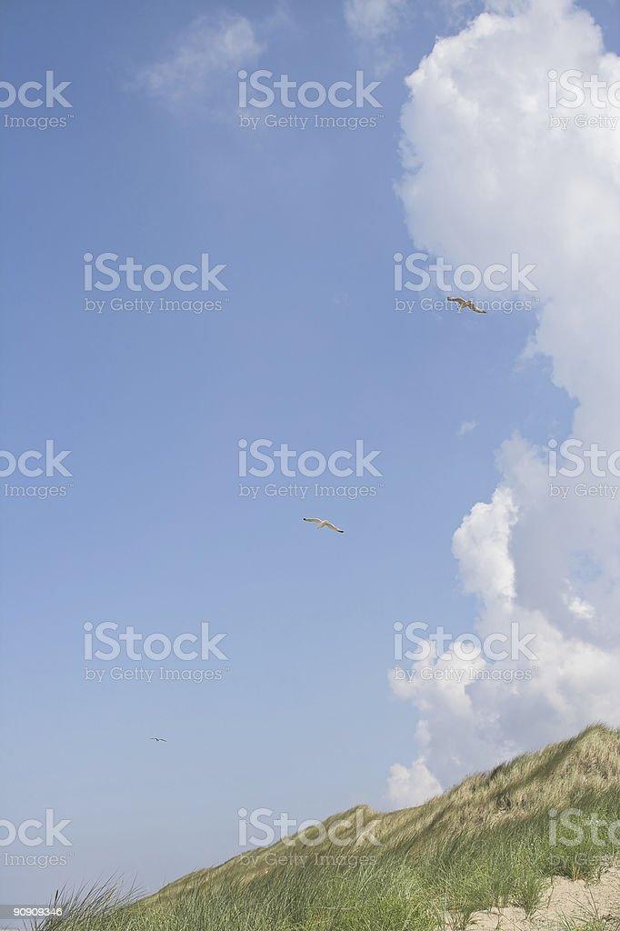 Birds in the sky royalty-free stock photo