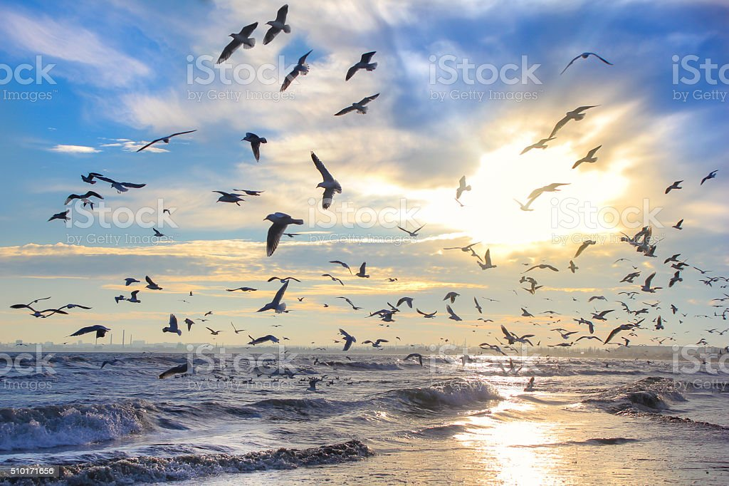 Birds in the sun against the sky and the sea stock photo