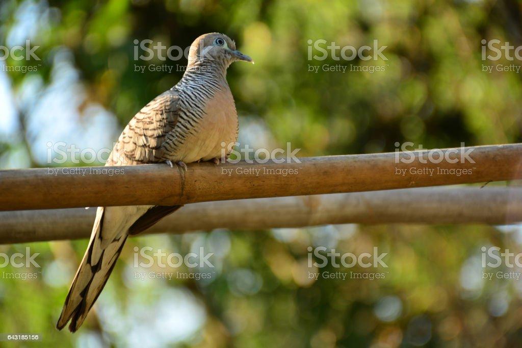 Birds in wildlife. Bird sitting on a branch stock photo