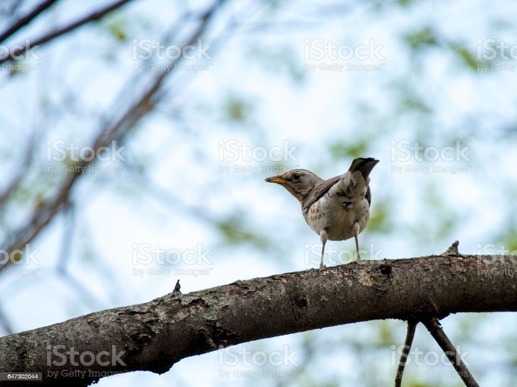Birds in wildlife. View of beautiful bird which sits on a branch under sunlight landscape. Sunny, amazing, sparrow image. stock photo
