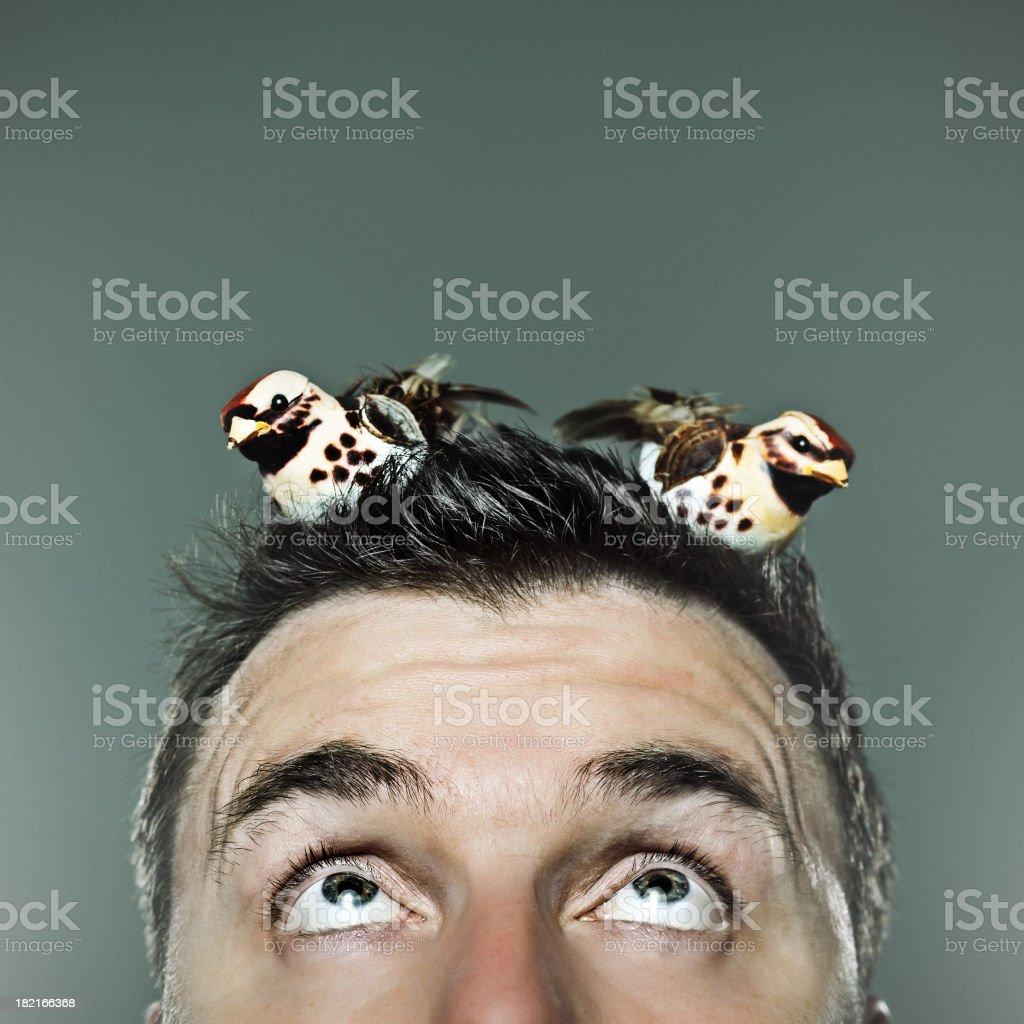 Birds in your head stock photo