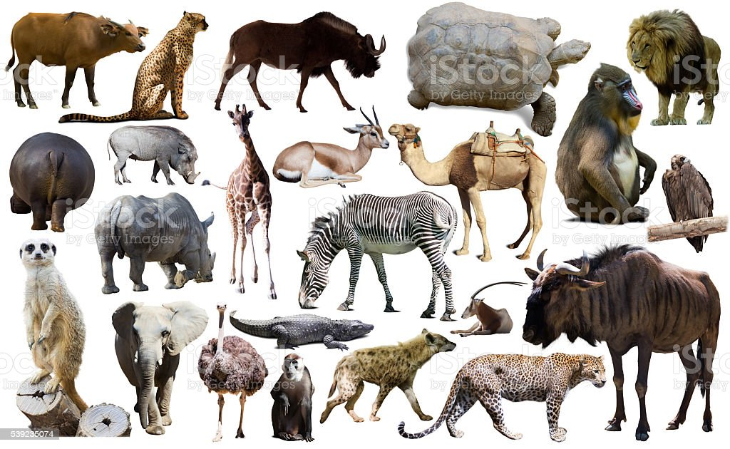 Birds, mammal and other animals of Africa isolated stock photo