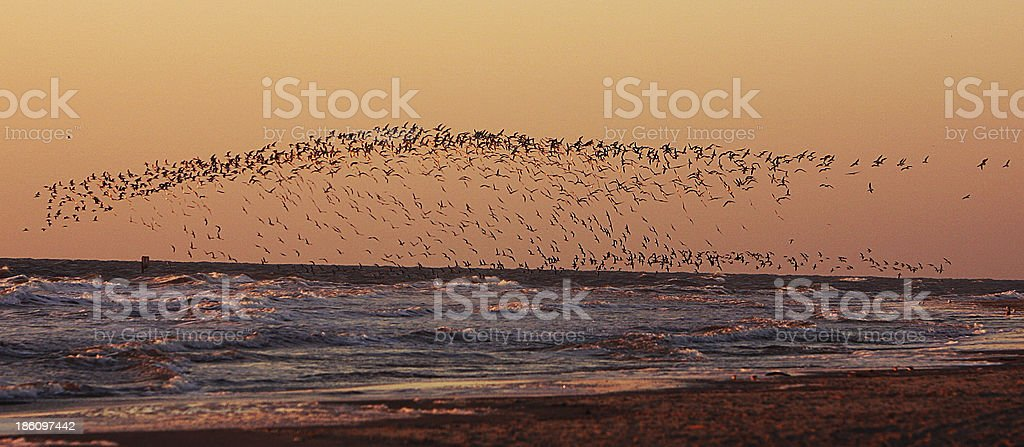 Bird's migration royalty-free stock photo