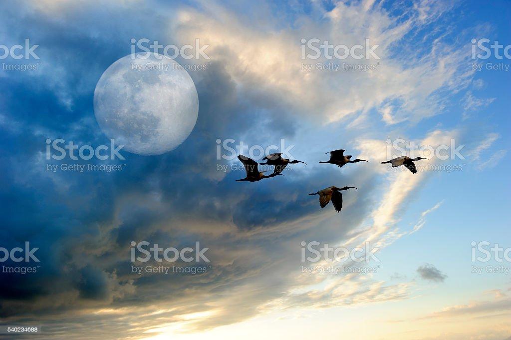 Birds Moon stock photo