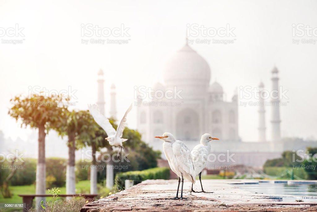 Birds near Taj Mahal stock photo