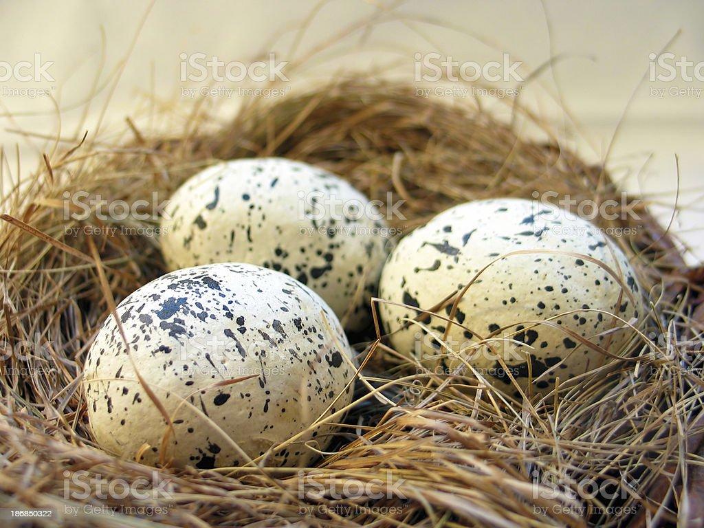 Bird's Nest 2 royalty-free stock photo