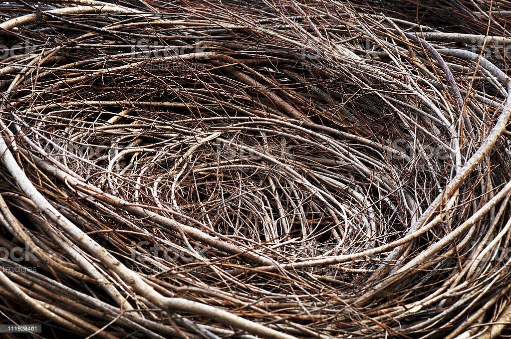 Bird's Nest Close Up royalty-free stock photo
