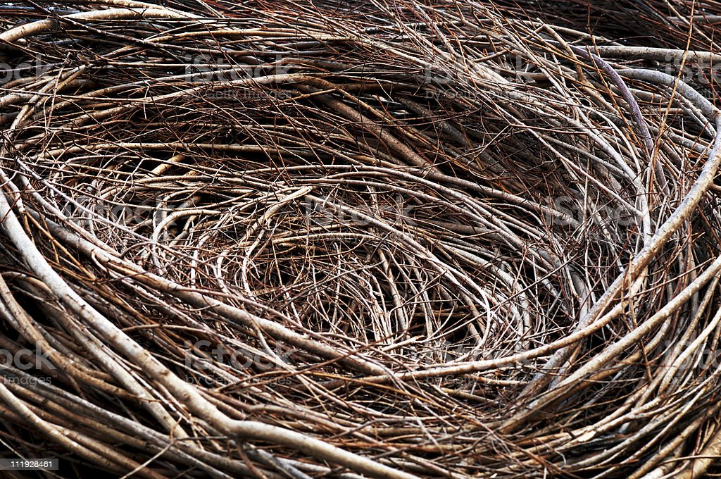 Bird's Nest Close Up stock photo