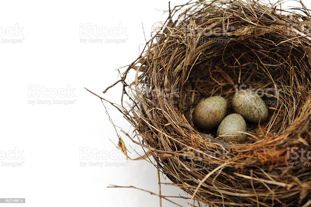 Birds nest eggs speckled isolated on white royalty-free stock photo