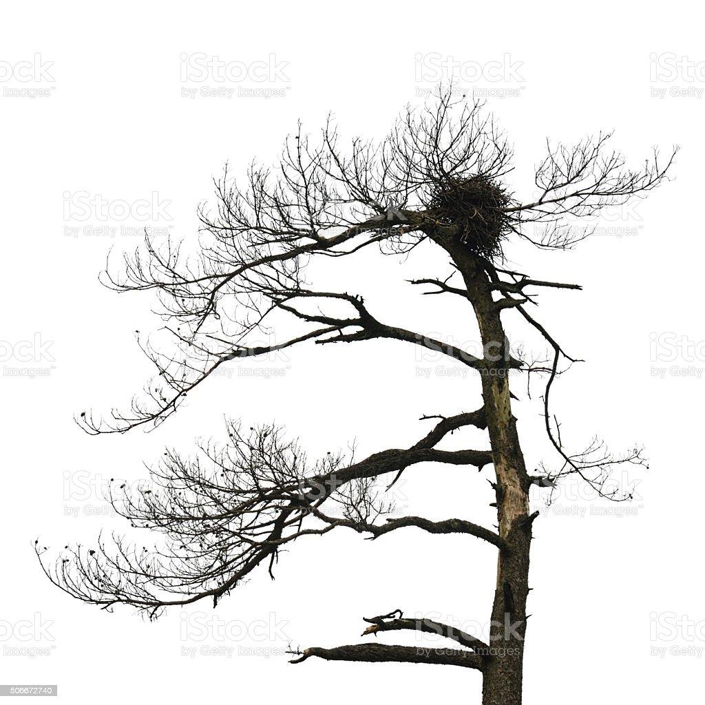 Bird's Nest on bare tree stock photo