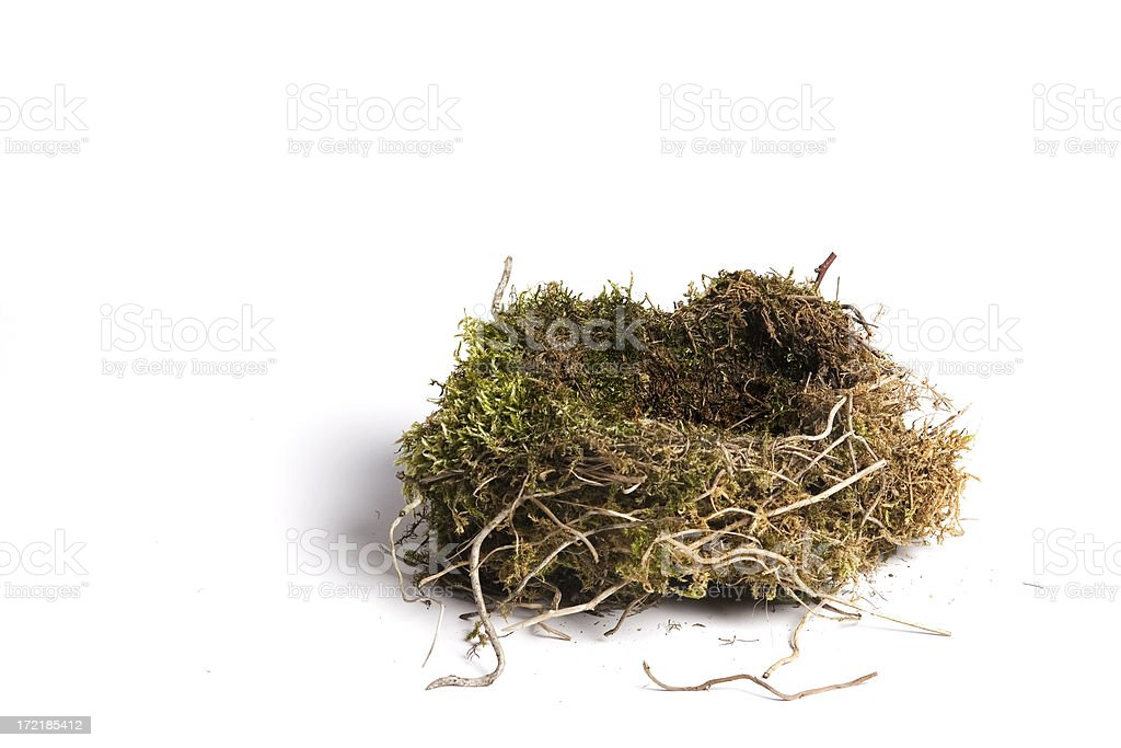 bird's nest stock photo