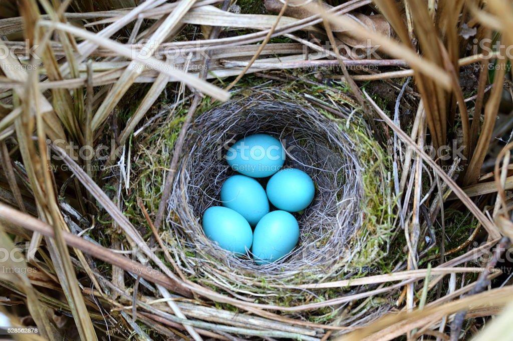Bird's nest stock photo