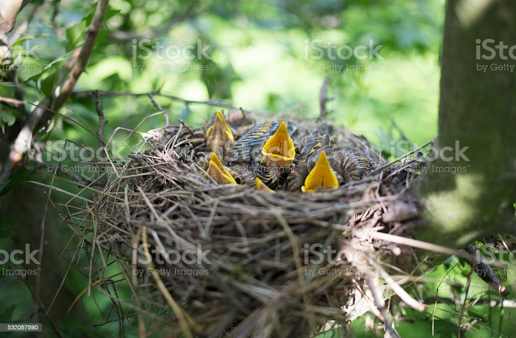 Bird's nest. stock photo