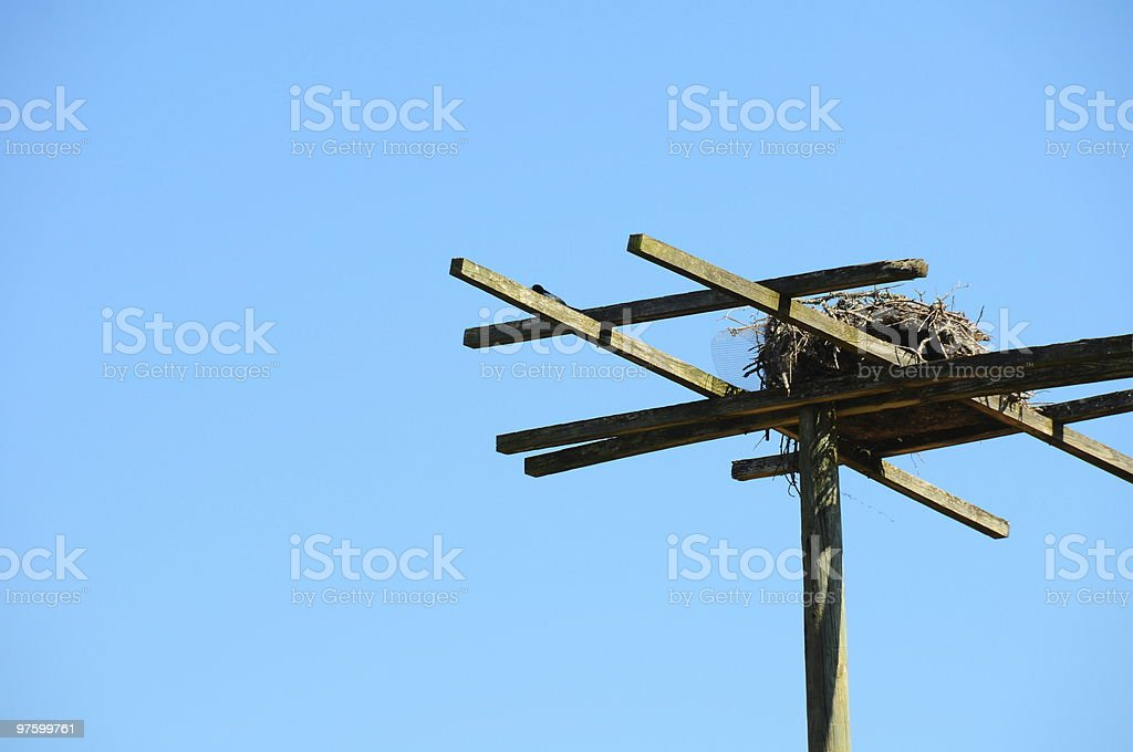 Birds Nest stock photo