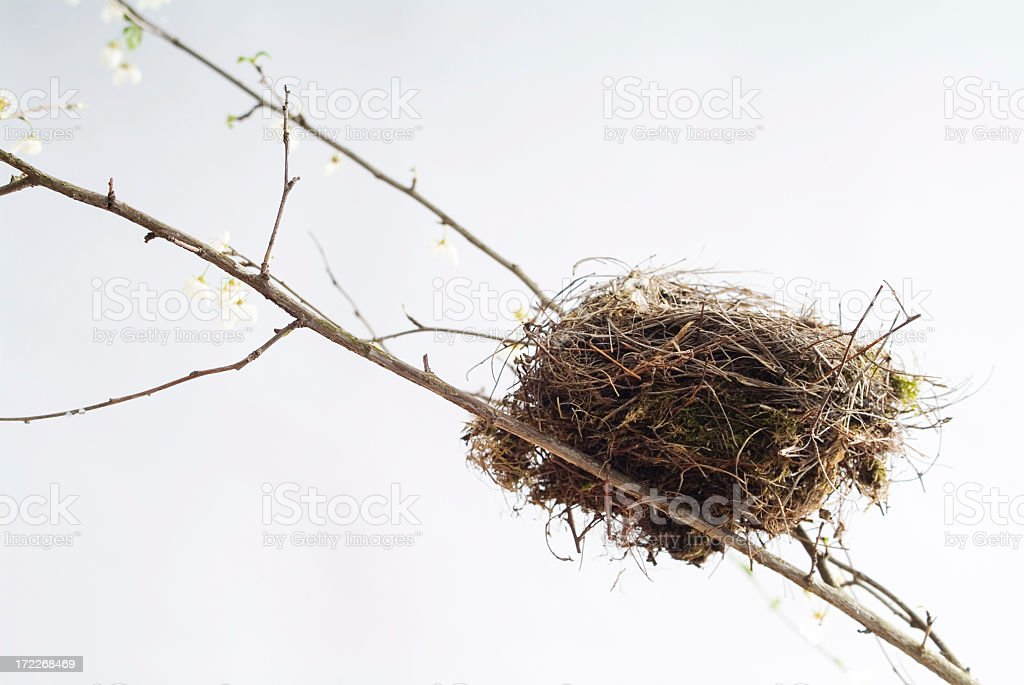 Bird's Nest Series royalty-free stock photo