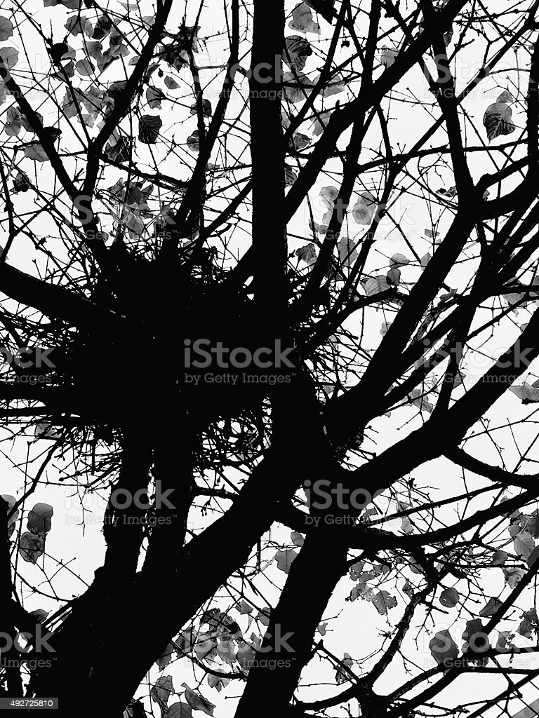 Bird's nest silhouette in a tree royalty-free stock photo