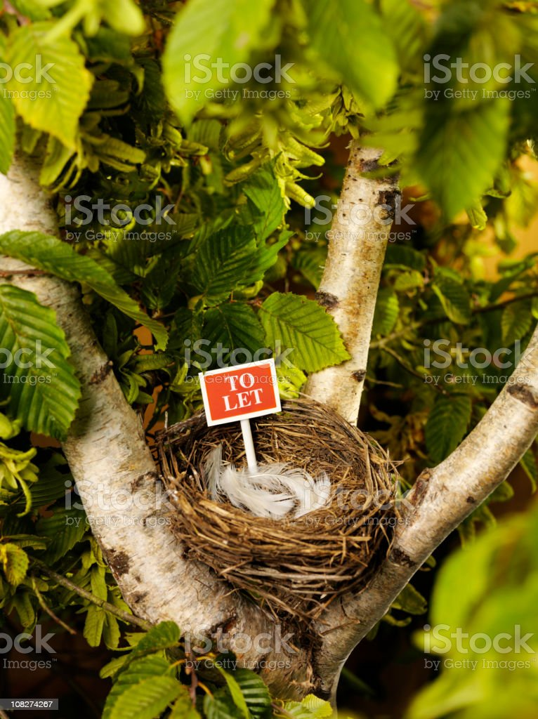 Birds Nest to Let in a Tree. royalty-free stock photo