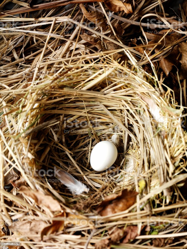 Birds Nest with Egg royalty-free stock photo
