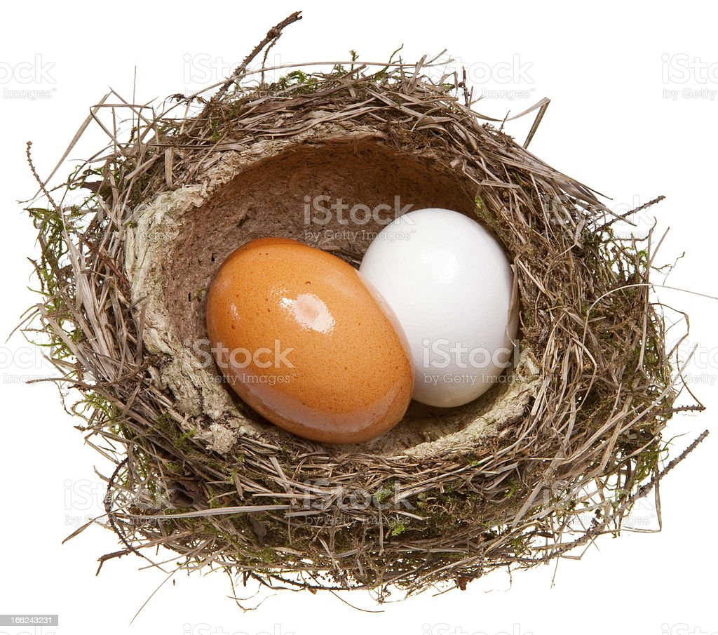 birds nest with eggs inside, isolated on white royalty-free stock photo