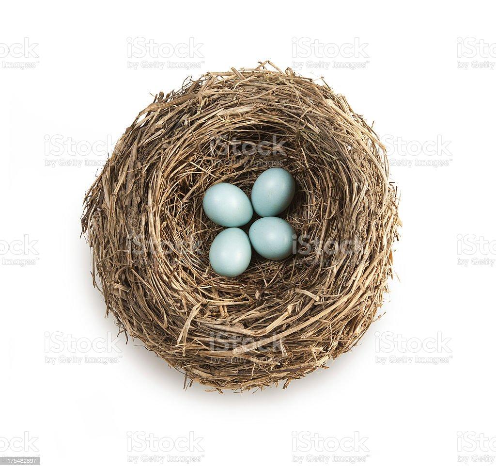 Bird's nest with four blue eggs stock photo