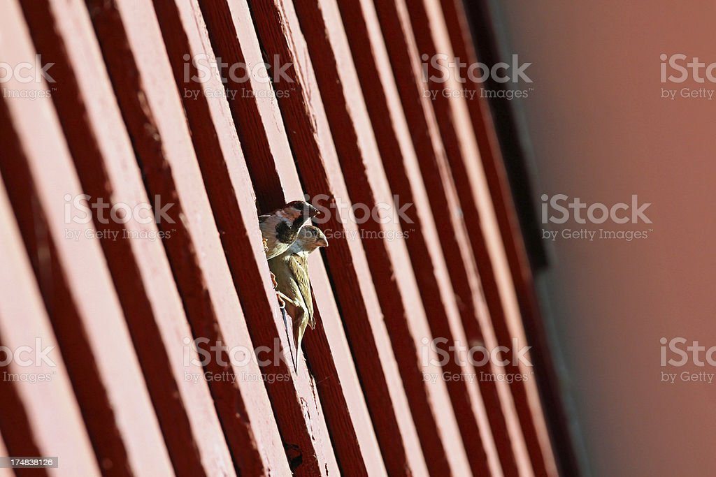 Birds nesting in a house. stock photo
