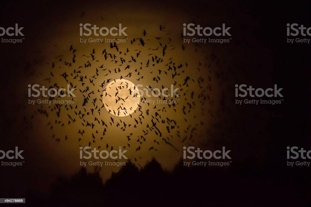 Birds night stock photo