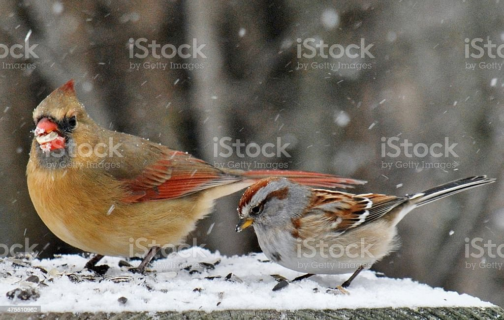 Birds Of A Feather - Winter Feeding stock photo