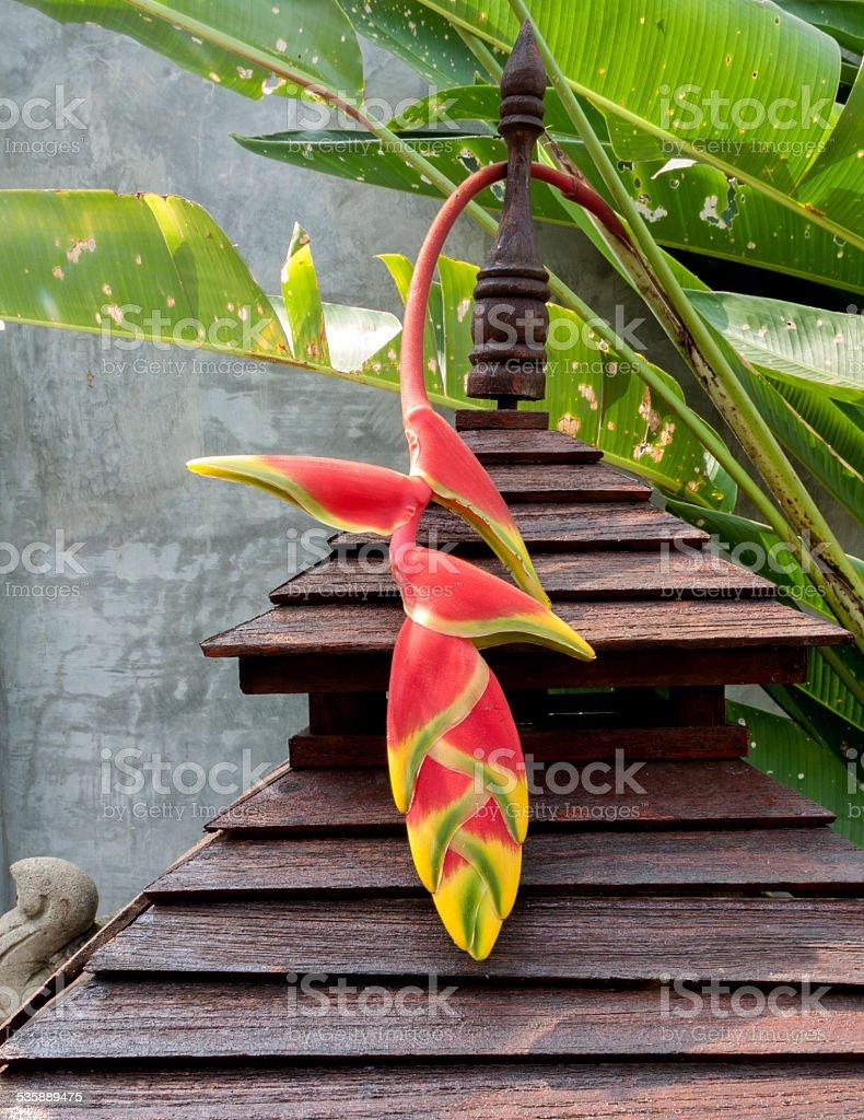 Birds Of Paradise Flower royalty-free stock photo