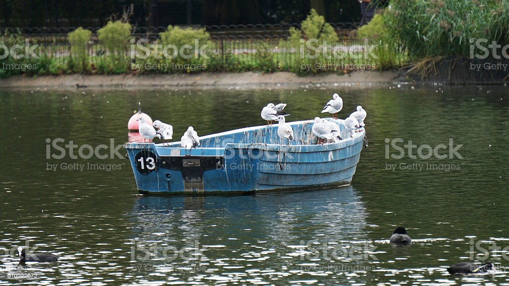 Birds on a boat , unlucky number 13 stock photo