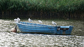 Birds on a boat , unlucky number 13