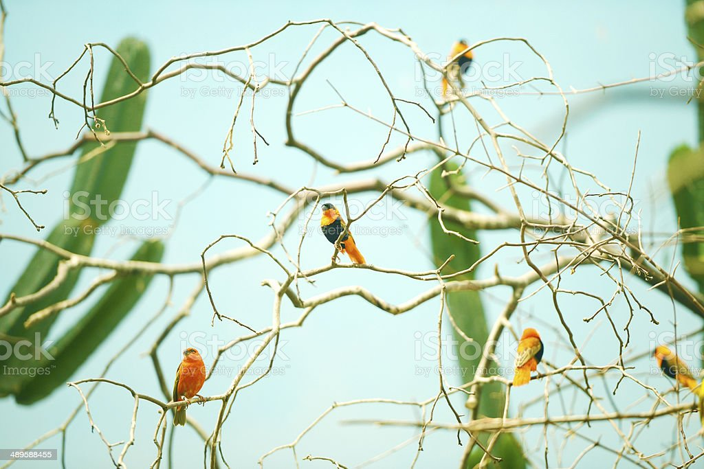 Birds on a branch stock photo