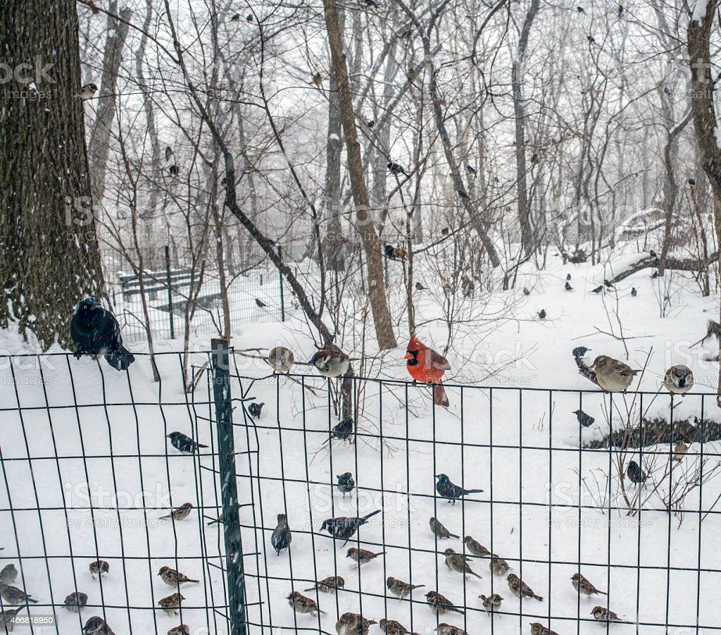 birds on a fence stock photo