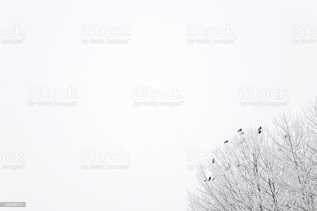 birds on a hoarfrosted tree stock photo