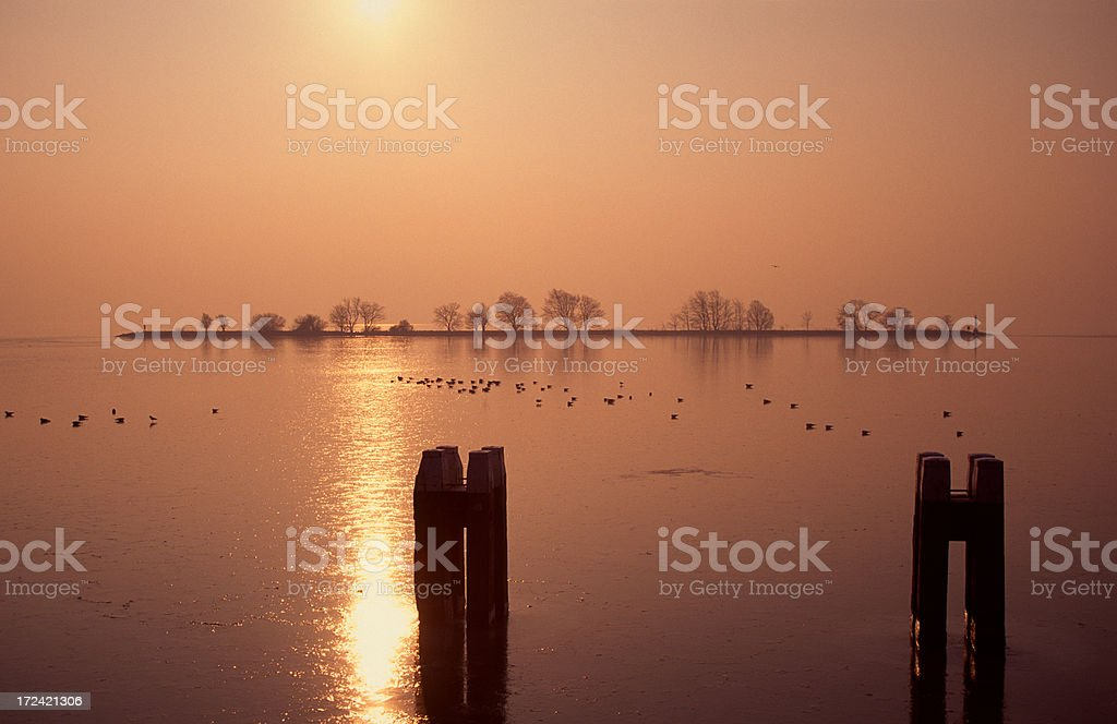 Birds on a icy lake stock photo