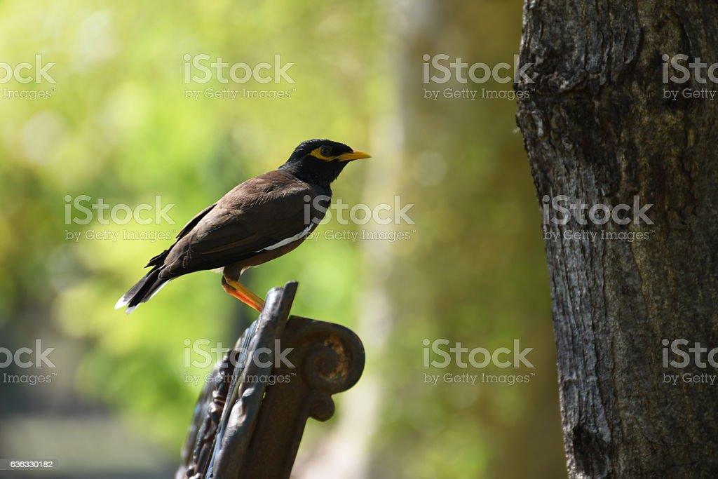 Birds on a park bench stock photo