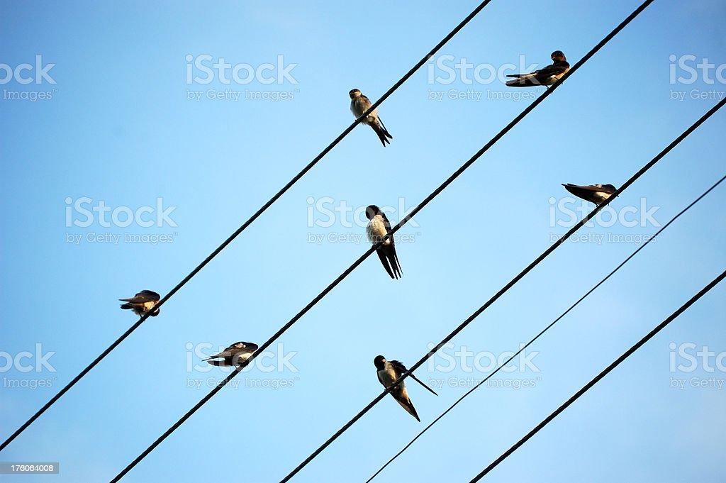 Birds On A Telephone Line stock photo
