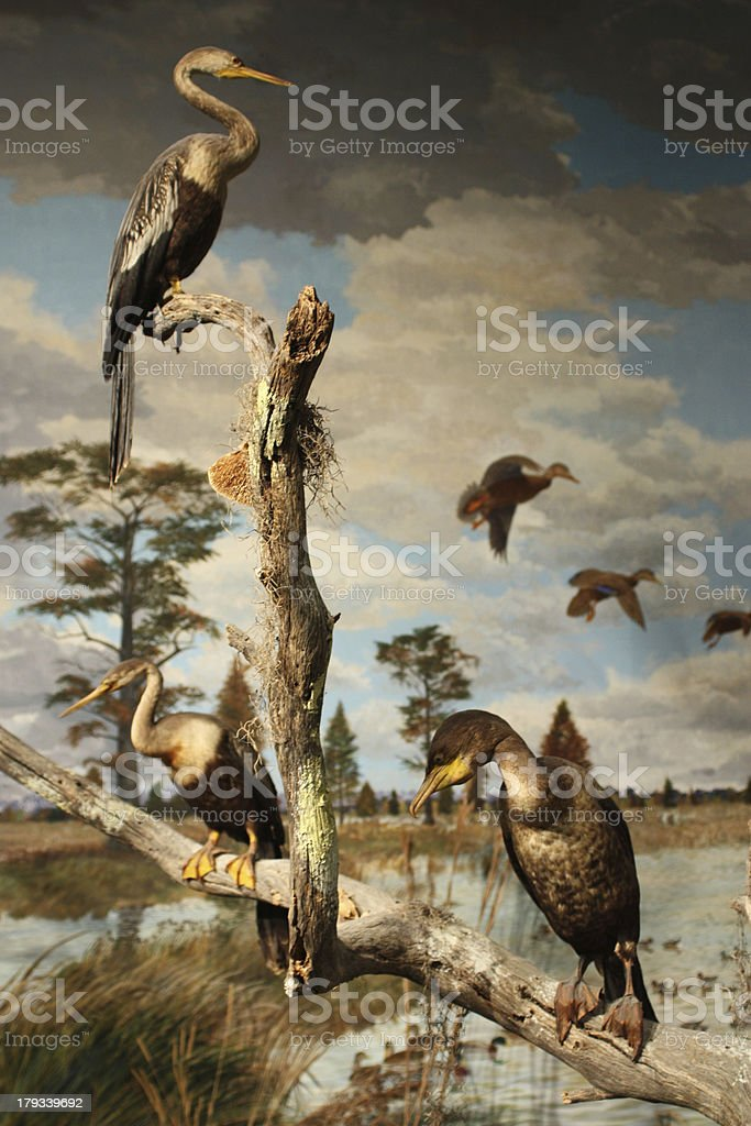 Birds on a tree branch royalty-free stock photo