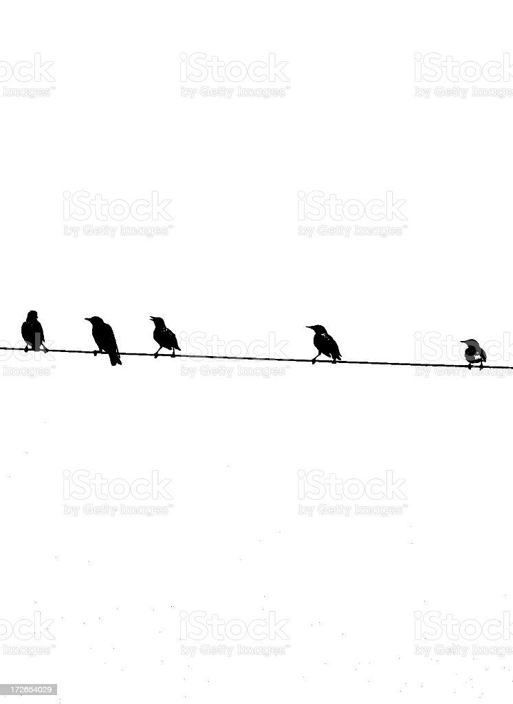 birds on a wire watching -bw stock photo