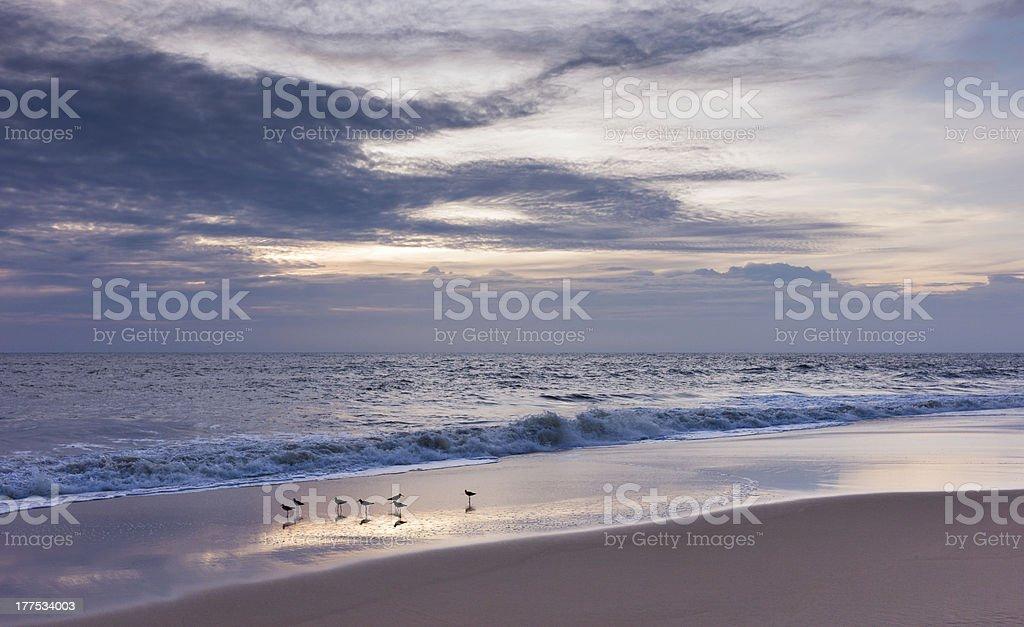 Birds on beach, Thottada, Kannur, Kerala, India. stock photo