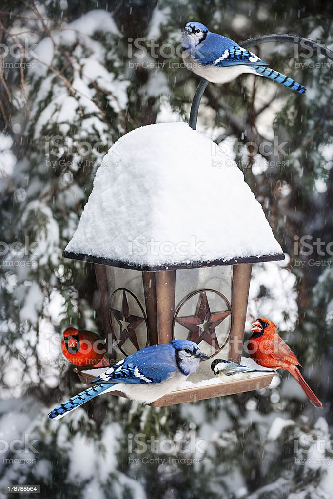 Birds on bird feeder in winter stock photo