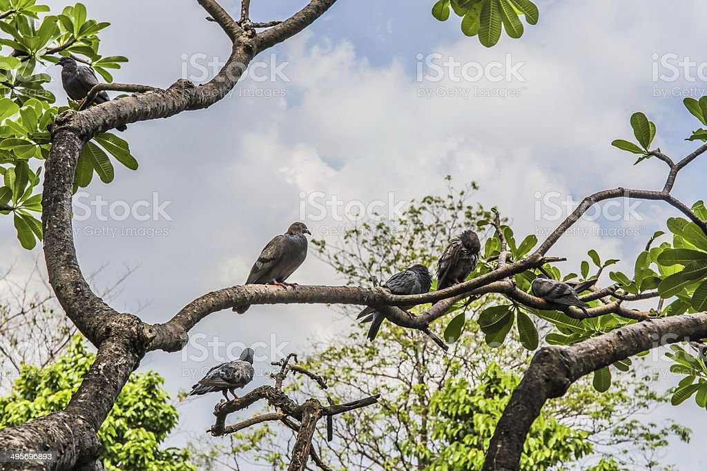Birds on branch royalty-free stock photo