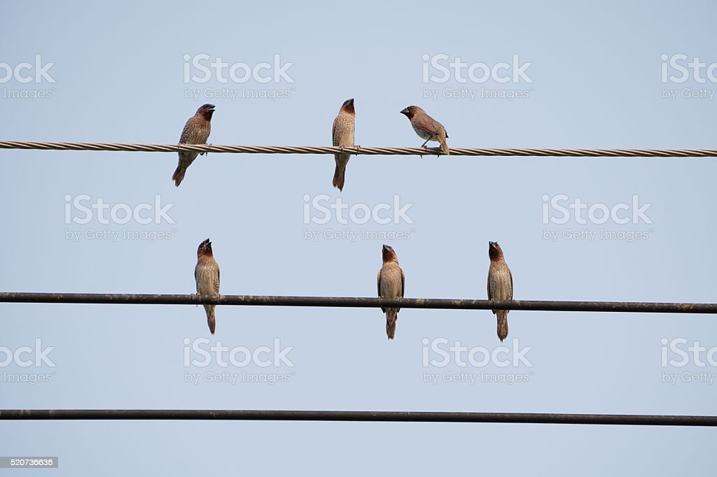 Birds on cable royalty-free stock photo