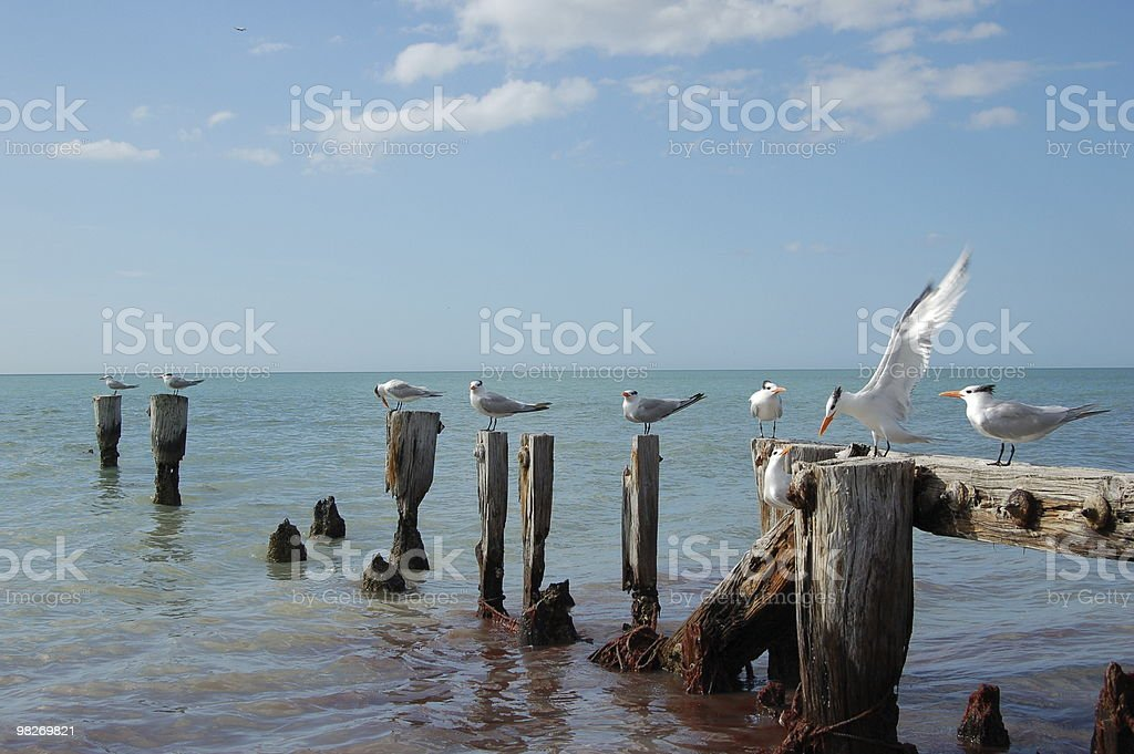 Birds on Gulf Pilings stock photo