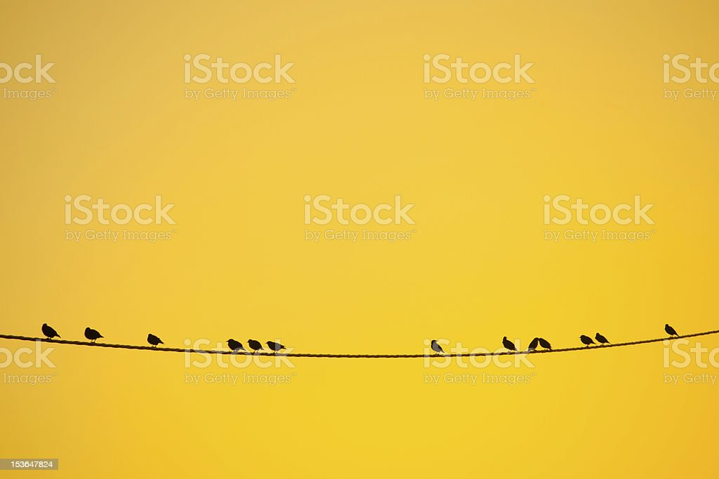 Birds on light wire at sunset stock photo