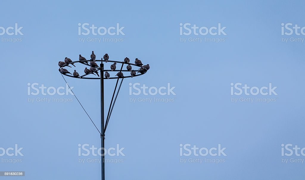 Birds on lightning rod stock photo