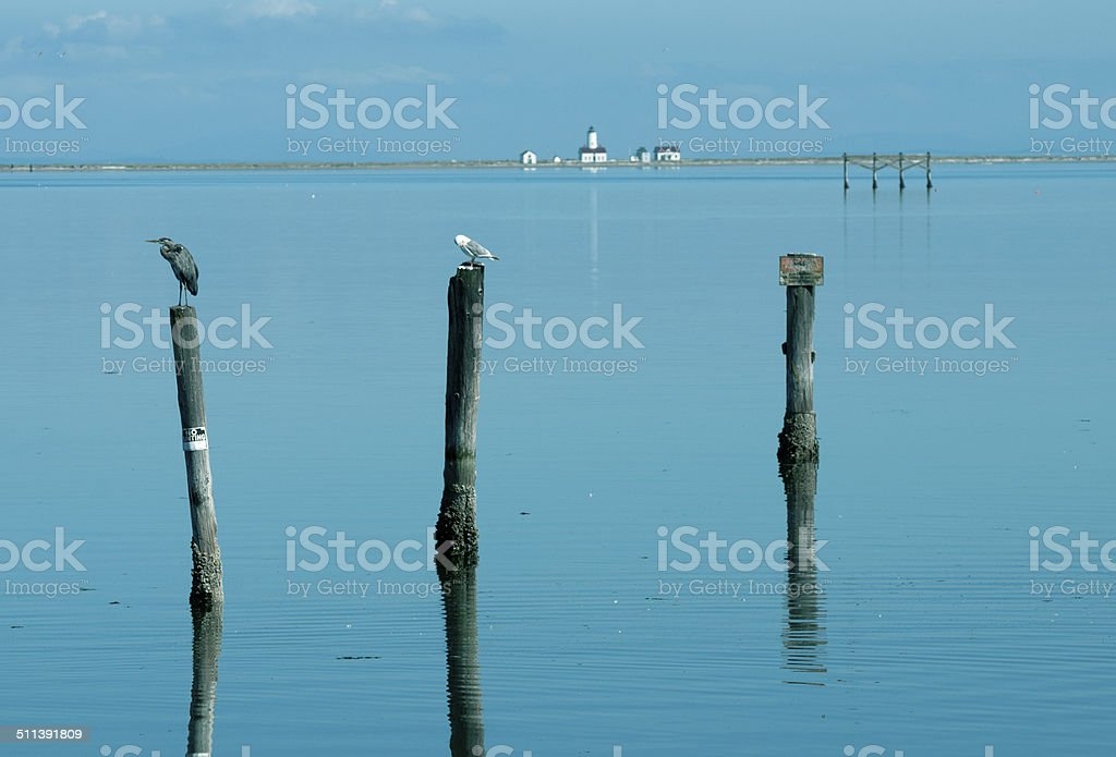 Birds on pilings and lighthouse beyond in Washington state stock photo