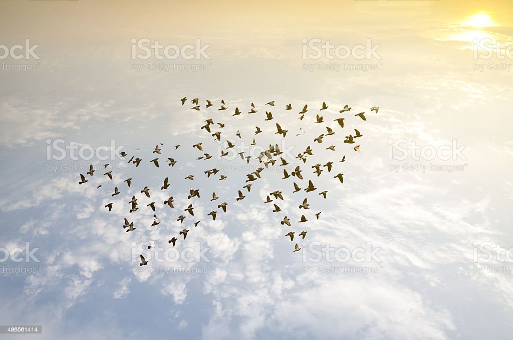 Birds on sky , growth development concept stock photo