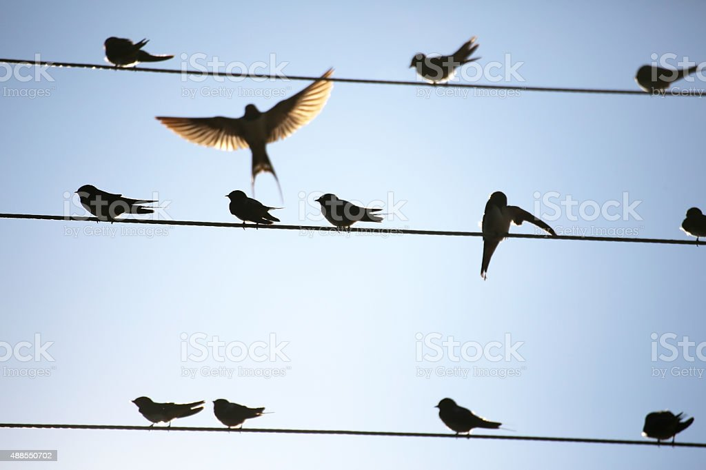 Birds on string stock photo