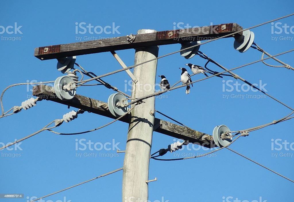 Birds on telephone wires with blue sky background stock photo